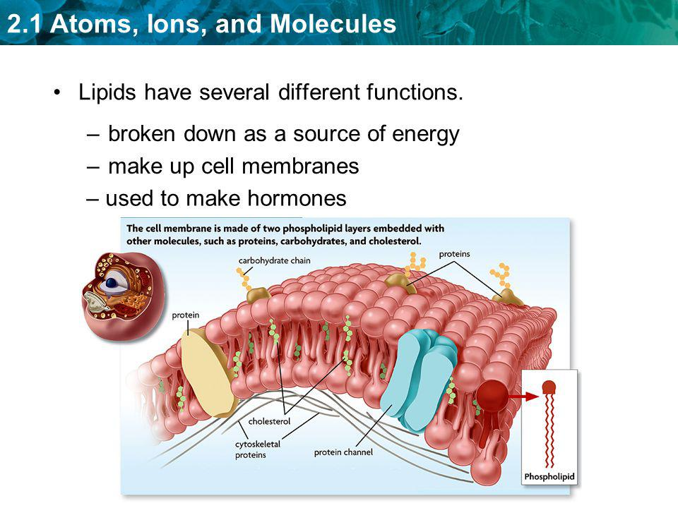 Lipids have several different functions.