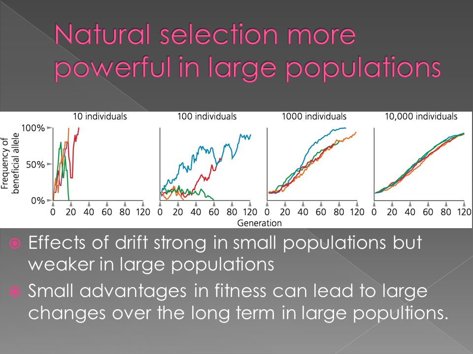 Natural selection more powerful in large populations