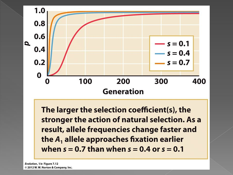 Figure 7.12 The consequences of natural selection favoring a dominant allele.