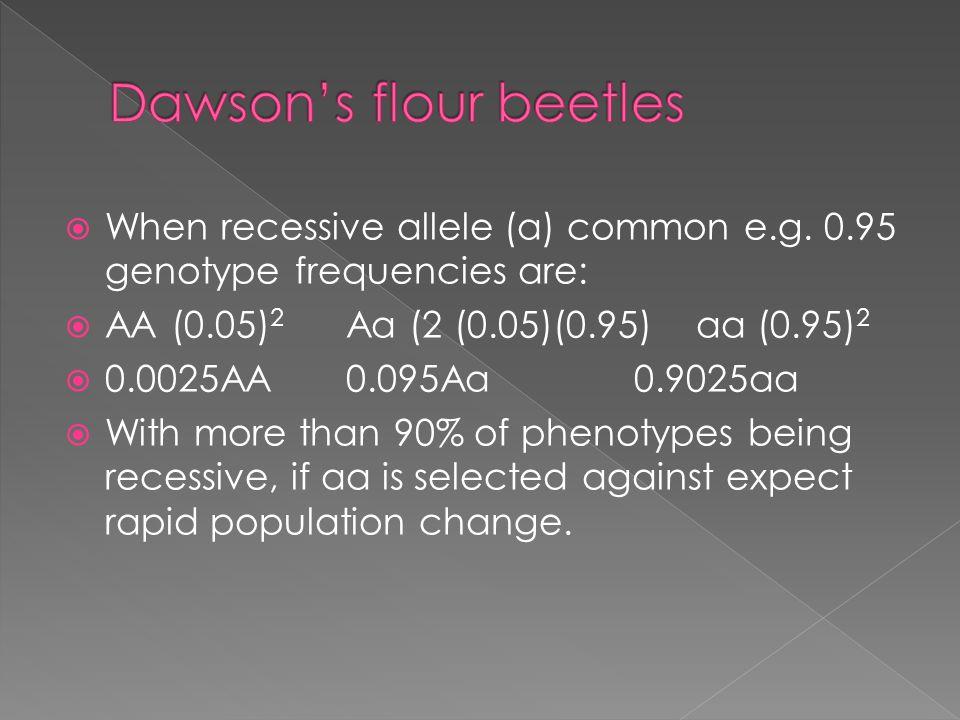 Dawson's flour beetles