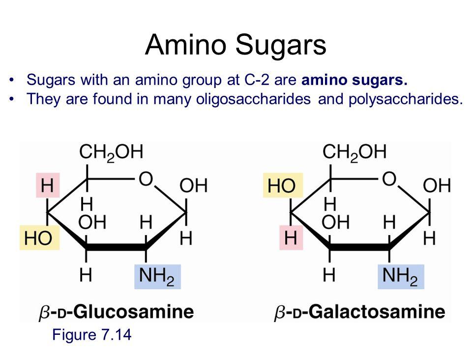 Amino Sugars Sugars with an amino group at C-2 are amino sugars.