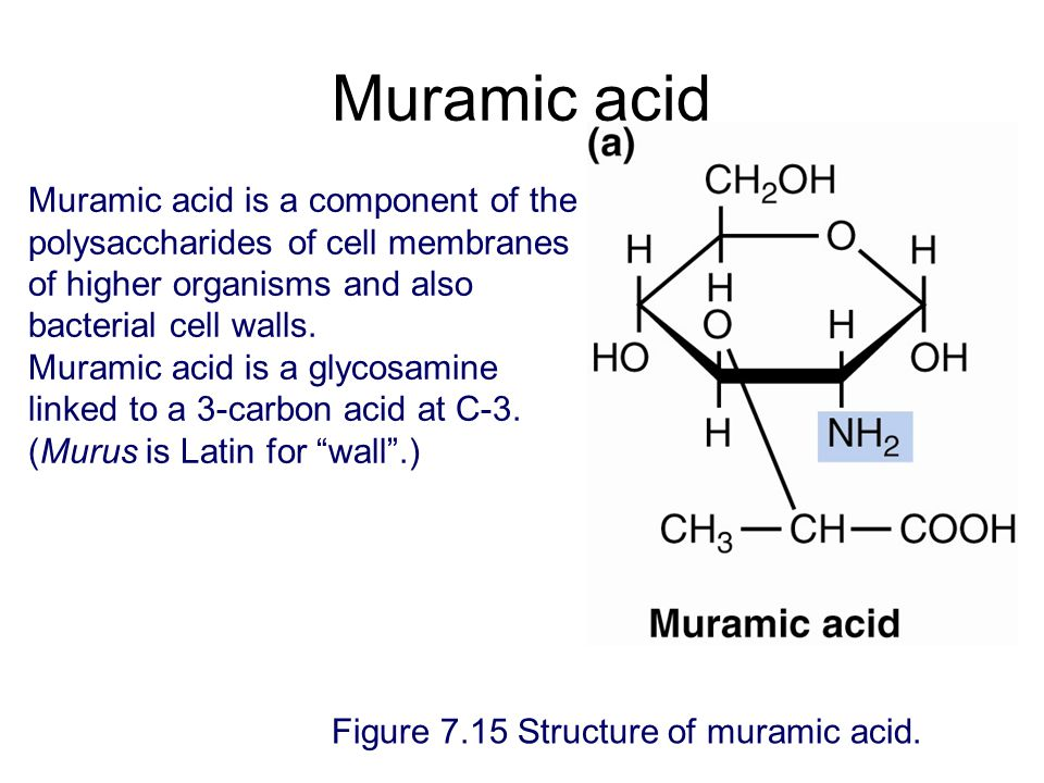 Muramic acid Muramic acid is a component of the polysaccharides of cell membranes of higher organisms and also bacterial cell walls.