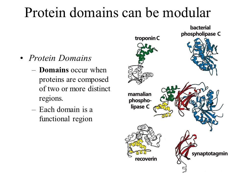 Protein domains can be modular