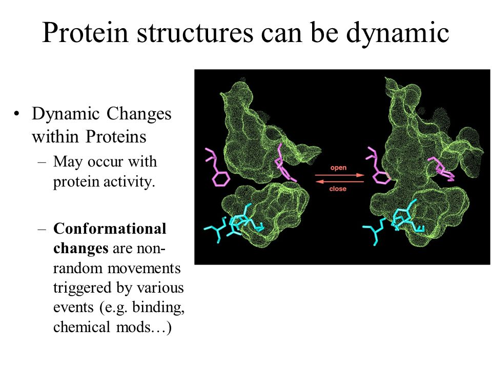 Protein structures can be dynamic