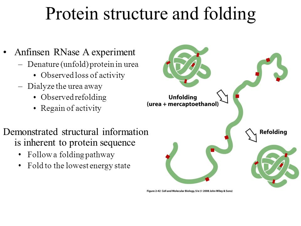Protein structure and folding