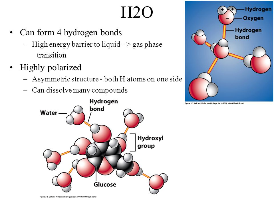 H2O Can form 4 hydrogen bonds Highly polarized