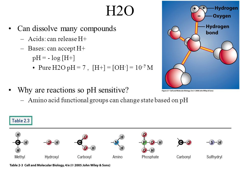 H2O Can dissolve many compounds Why are reactions so pH sensitive