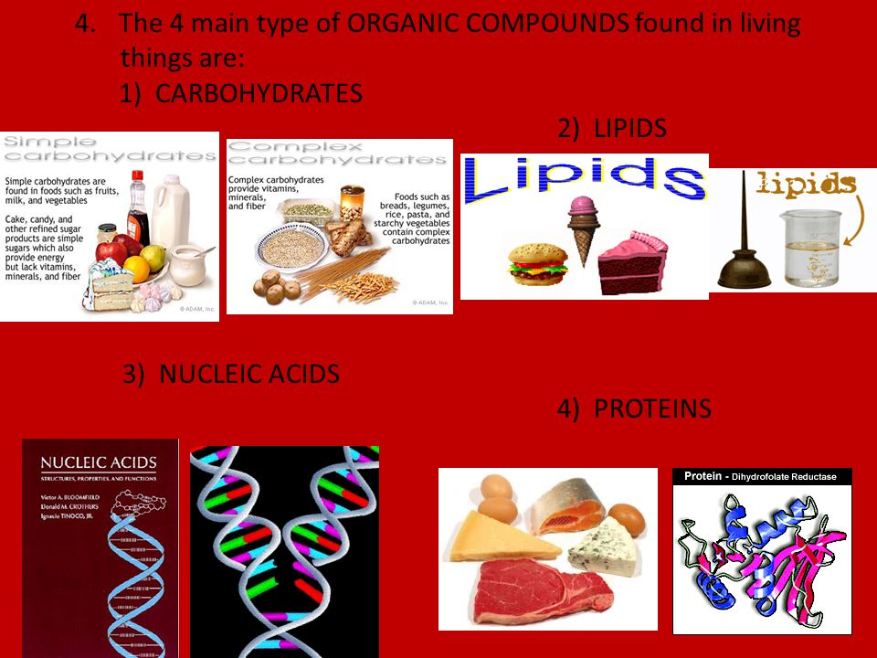 The 4 main type of ORGANIC COMPOUNDS found in living