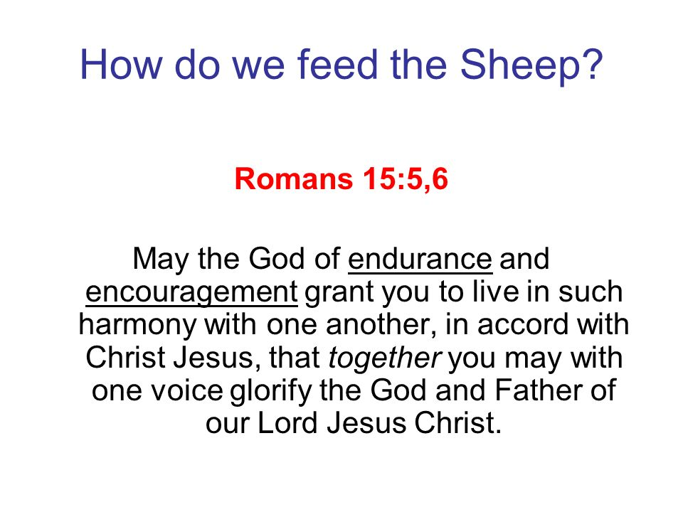 How do we feed the Sheep Romans 15:5,6