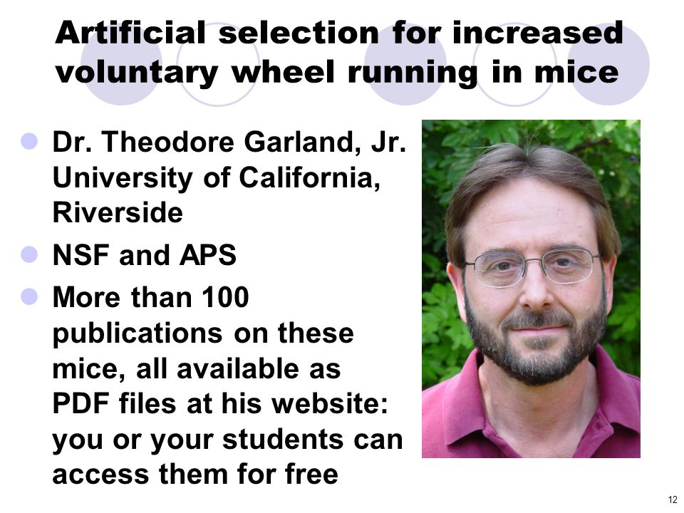 Artificial selection for increased voluntary wheel running in mice