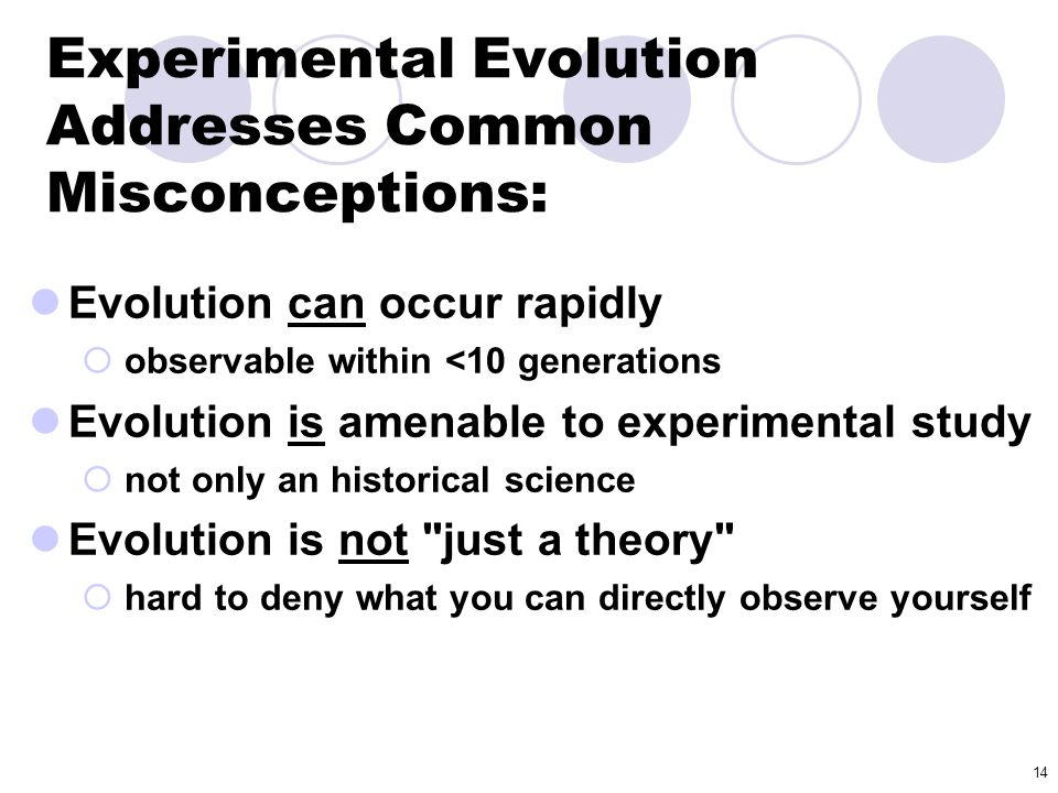 Experimental Evolution Addresses Common Misconceptions: