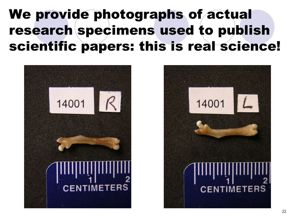 We provide photographs of actual research specimens used to publish scientific papers: this is real science!