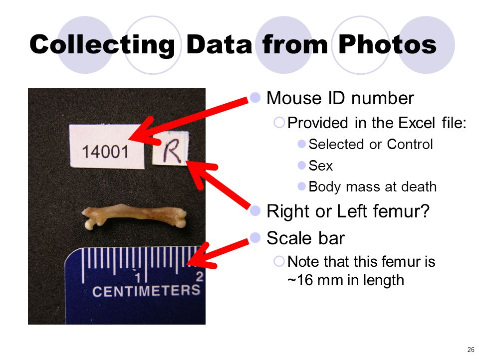 Collecting Data from Photos