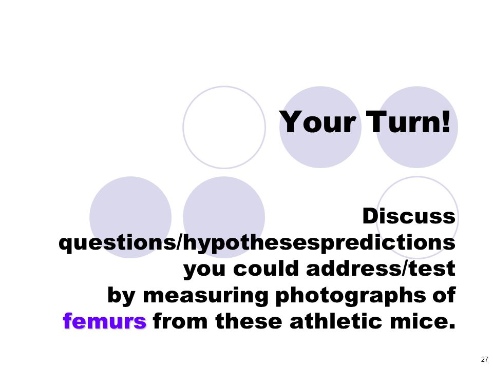 Your Turn! Discuss questions/hypothesespredictions you could address/test by measuring photographs of femurs from these athletic mice.