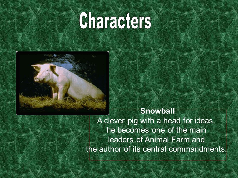 Characters Snowball A clever pig with a head for ideas,