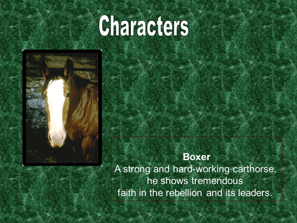 Characters Boxer A strong and hard-working carthorse,