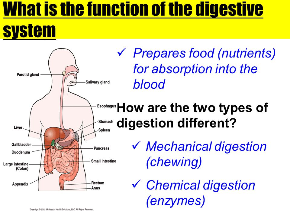What is the function of the digestive system