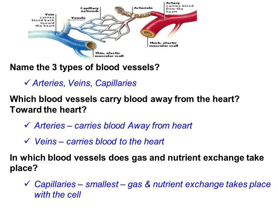 Name the 3 types of blood vessels