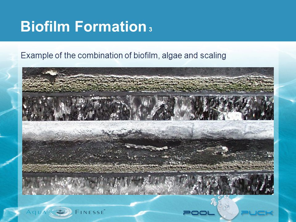 Biofilm Formation 3 Example of the combination of biofilm, algae and scaling