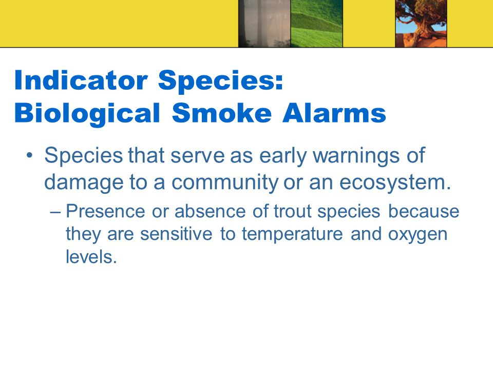 Indicator Species: Biological Smoke Alarms
