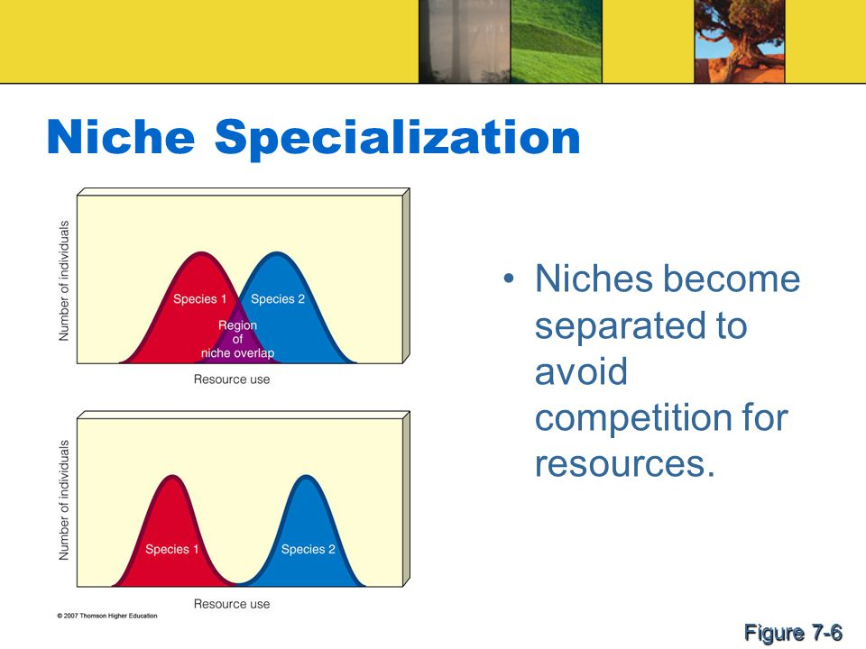 Niche Specialization Niches become separated to avoid competition for resources. Figure 7-6