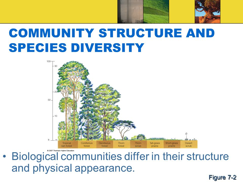 COMMUNITY STRUCTURE AND SPECIES DIVERSITY