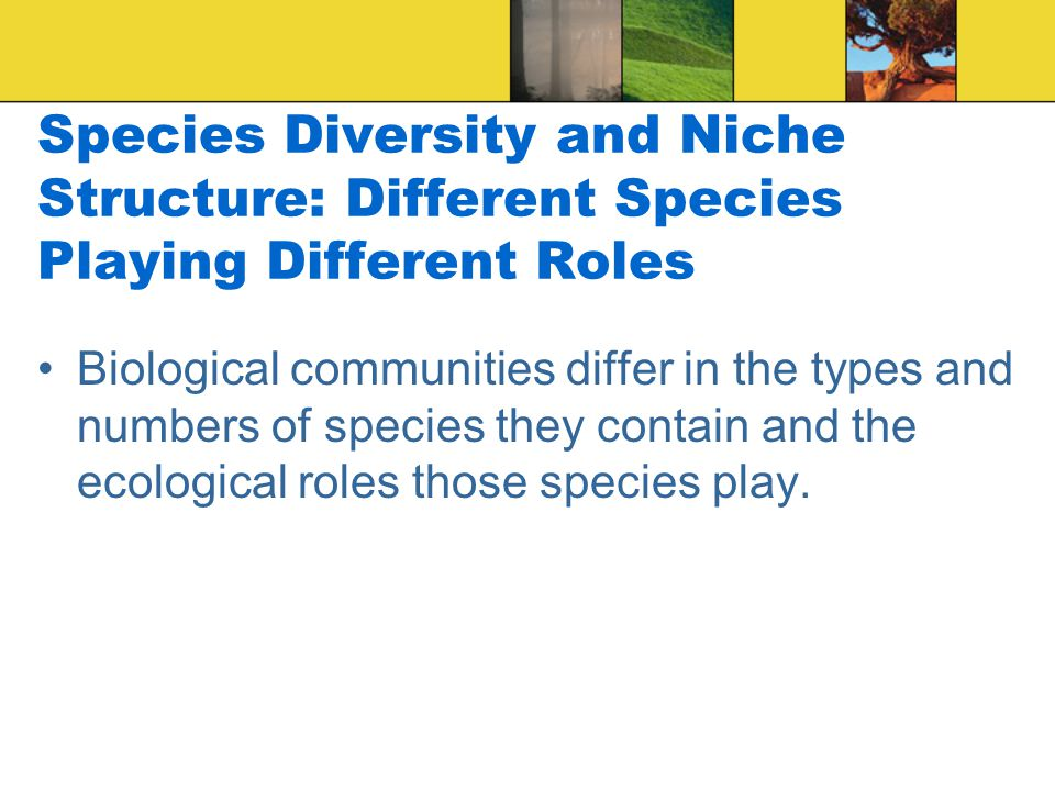 Species Diversity and Niche Structure: Different Species Playing Different Roles