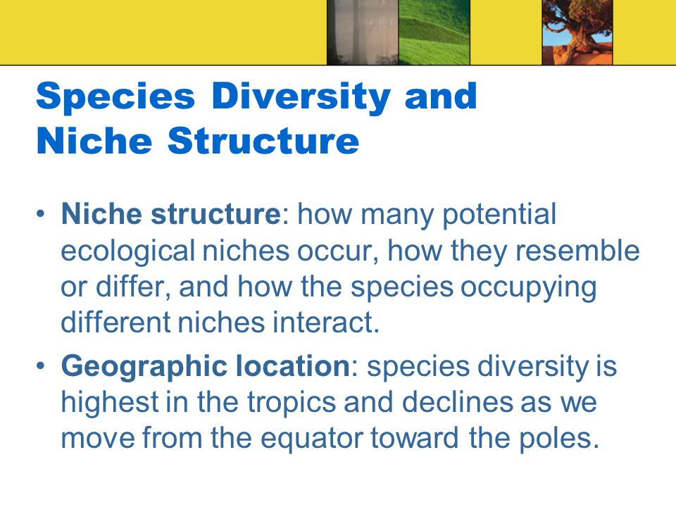 Species Diversity and Niche Structure