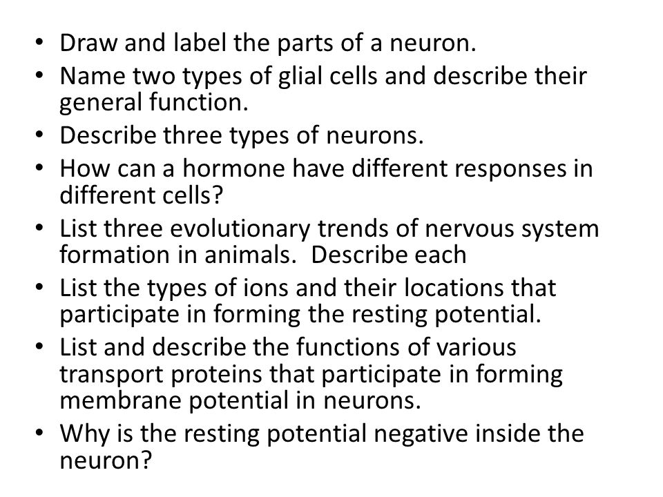 Draw and label the parts of a neuron.