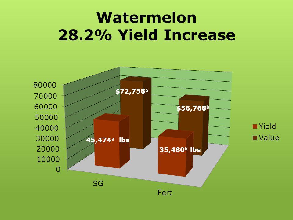 Watermelon 28.2% Yield Increase