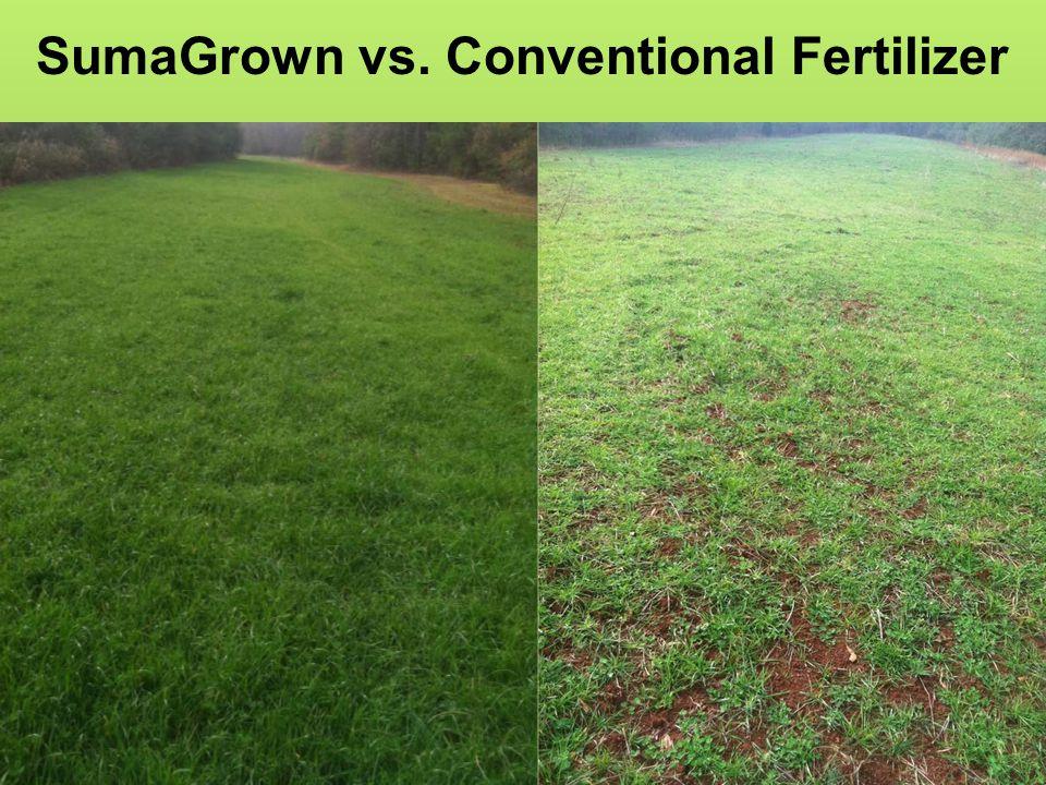SumaGrown vs. Conventional Fertilizer