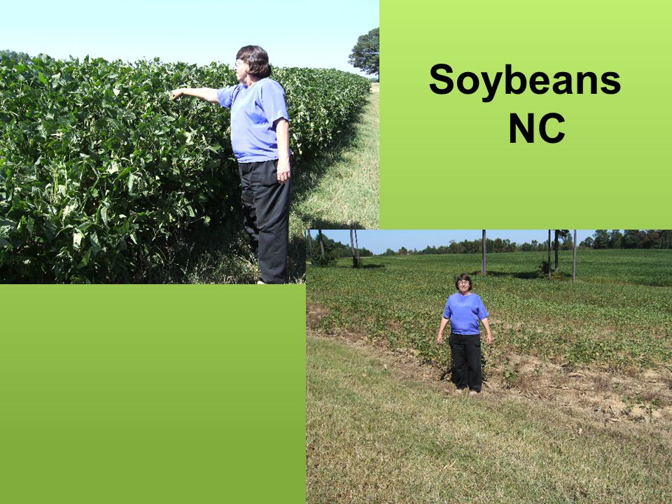 Soybeans NC