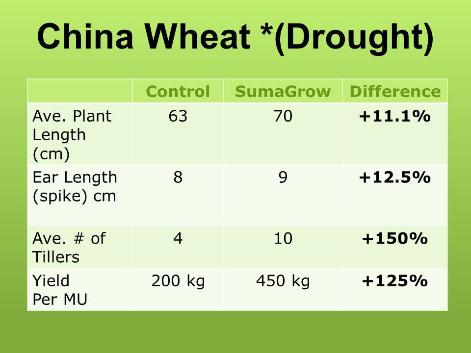 China Wheat *(Drought)