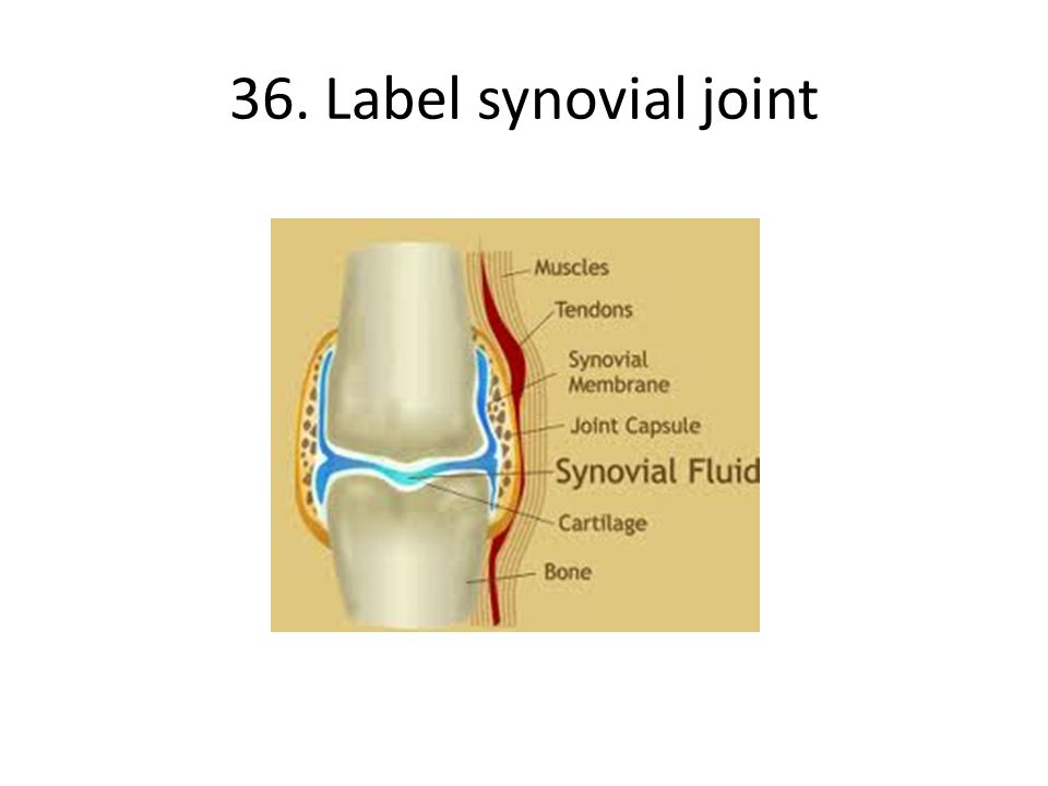 36. Label synovial joint