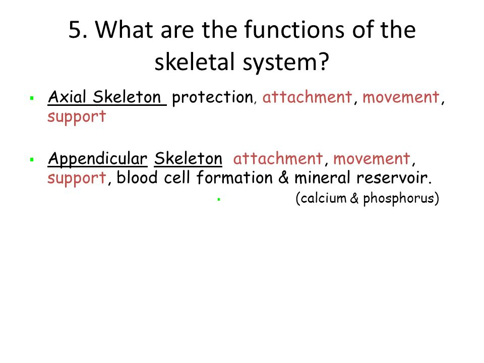5. What are the functions of the skeletal system