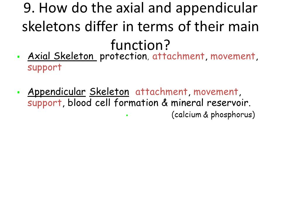 9. How do the axial and appendicular skeletons differ in terms of their main function