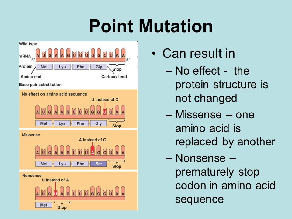 Point Mutation Can result in