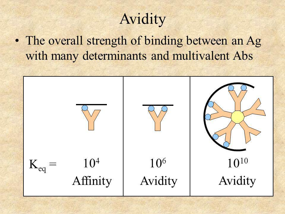 Avidity The overall strength of binding between an Ag with many determinants and multivalent Abs. Y.