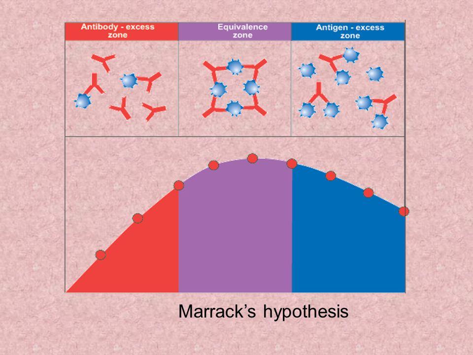 Marrack's hypothesis Marrack's hypothesis