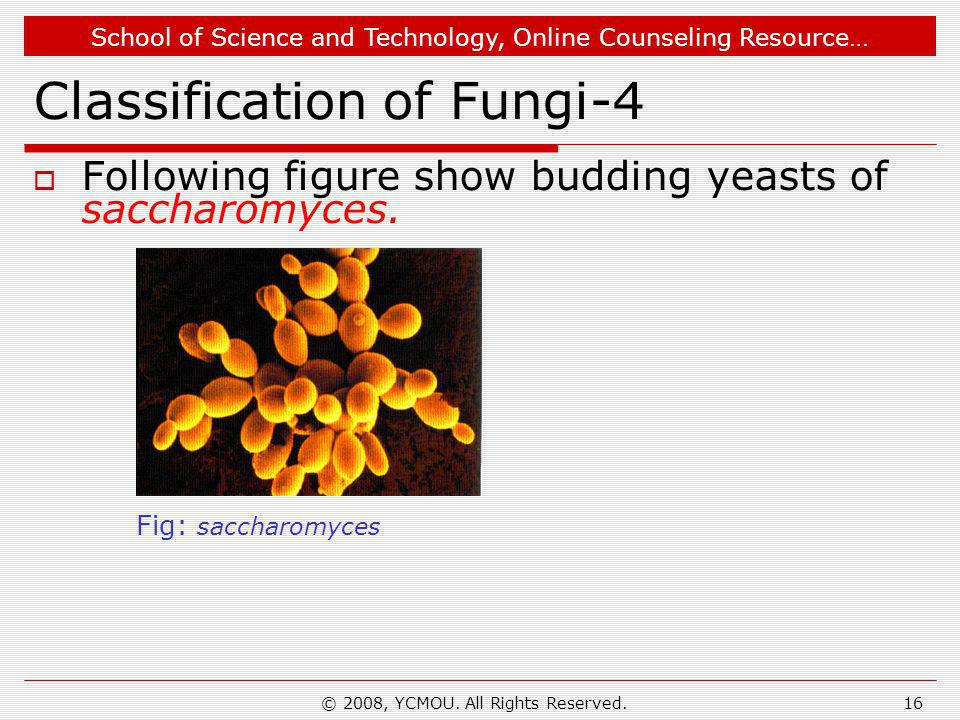 Classification of Fungi-4
