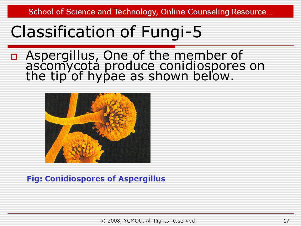 Classification of Fungi-5