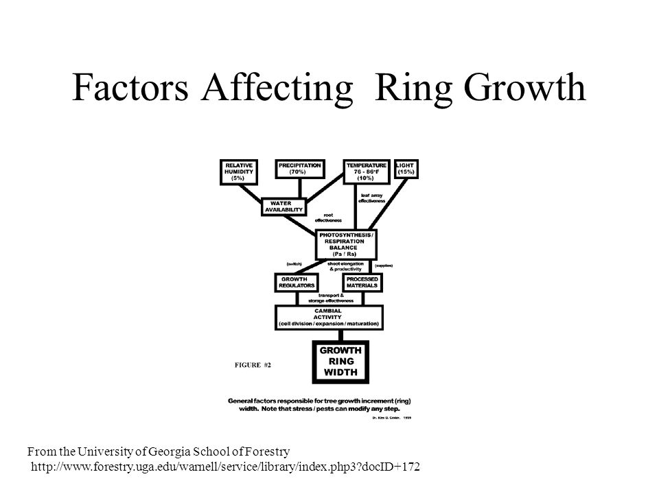 Factors Affecting Ring Growth