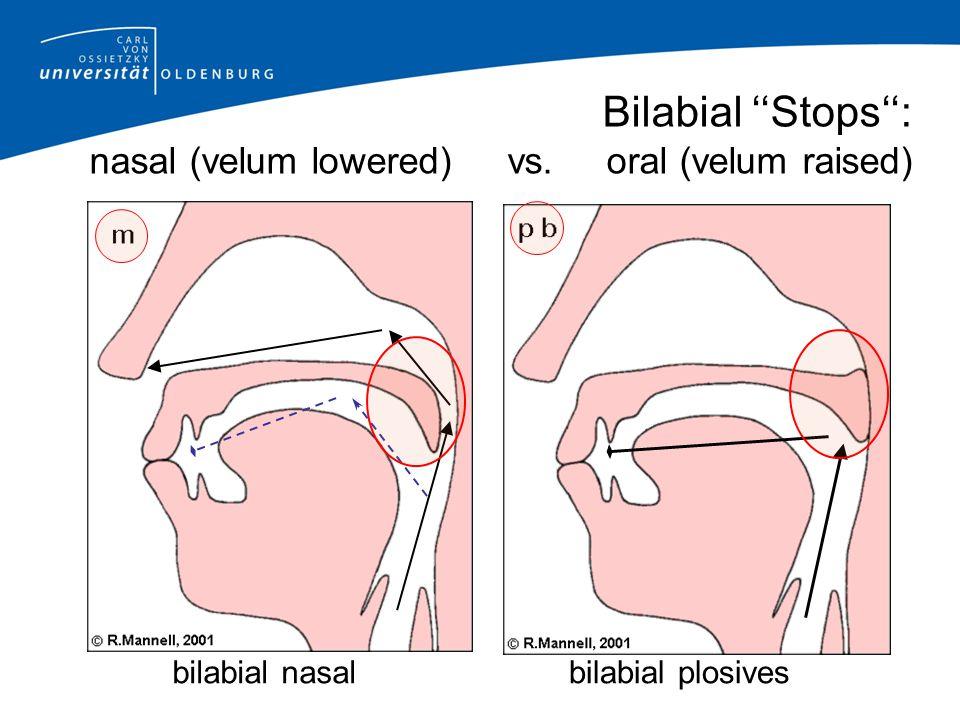 Bilabial ''Stops'': nasal (velum lowered) vs. oral (velum raised)
