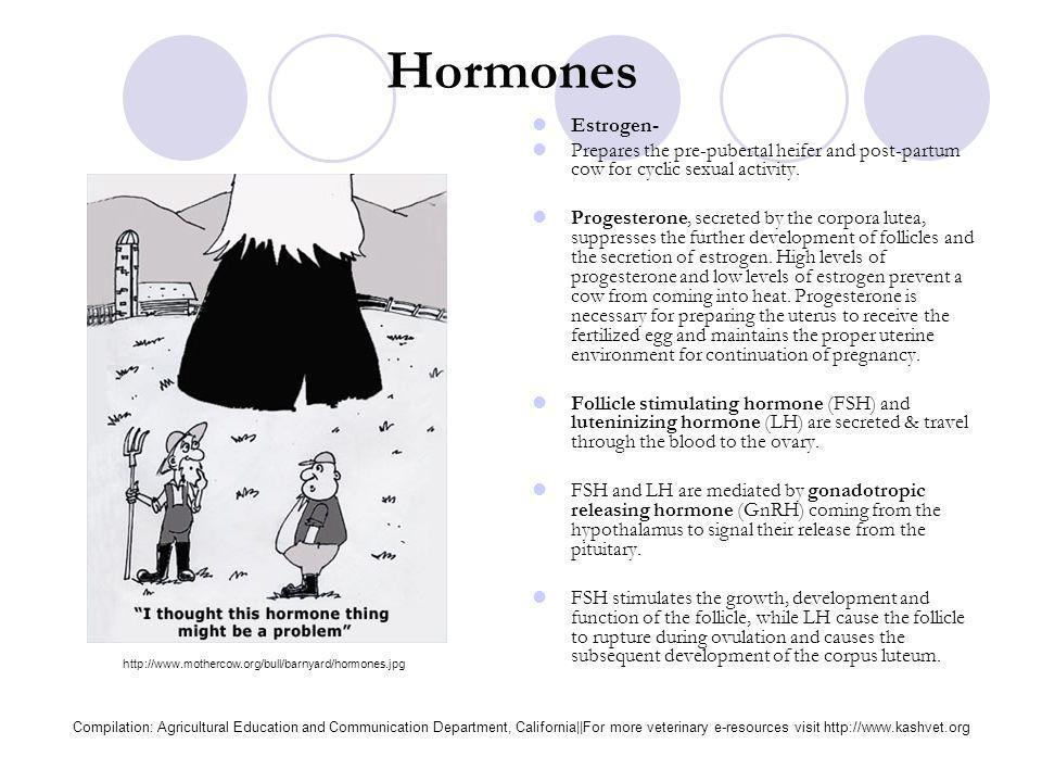 Hormones Estrogen- Prepares the pre-pubertal heifer and post-partum cow for cyclic sexual activity.