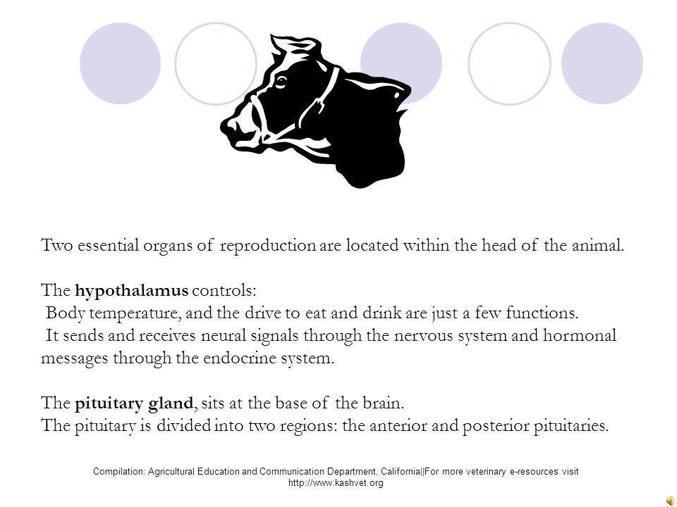 The hypothalamus controls: