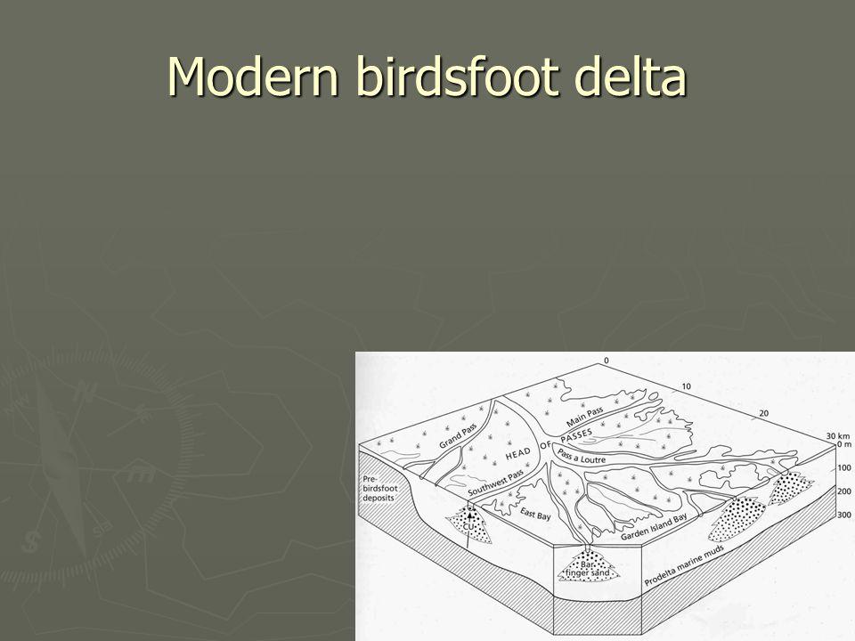 Modern birdsfoot delta