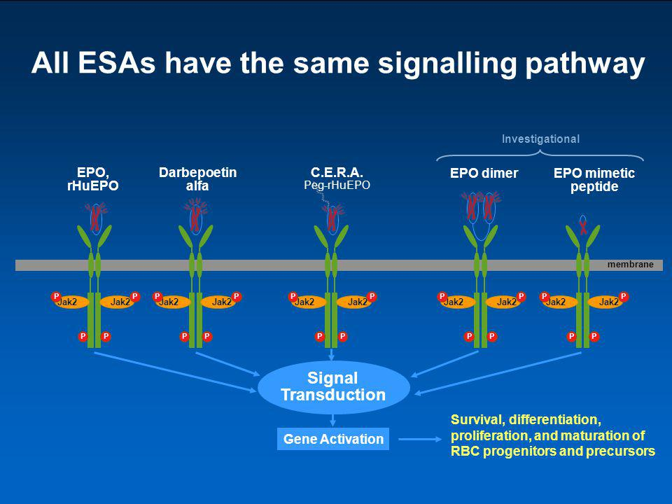 All ESAs have the same signalling pathway