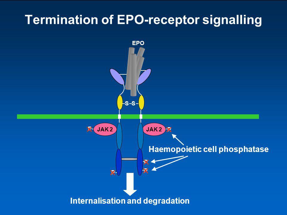 Termination of EPO-receptor signalling