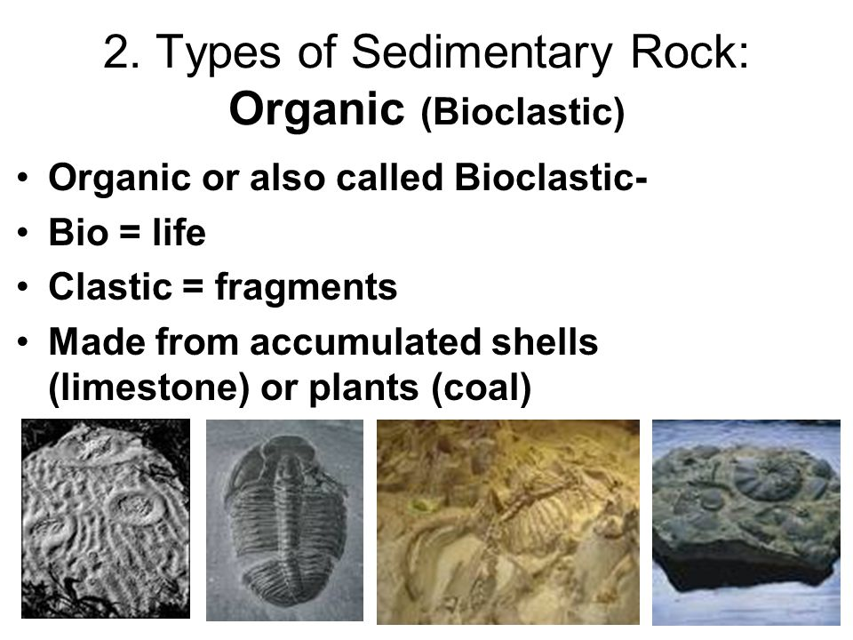 2. Types of Sedimentary Rock: Organic (Bioclastic)