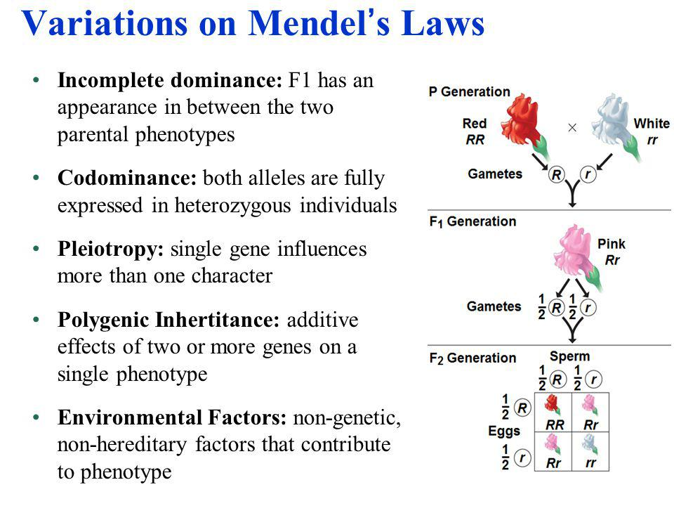 mendels approach Darwin and mendel: evolution and genetics many studies have shown that students' understanding of evolution is low and some sort of historical approach would be.